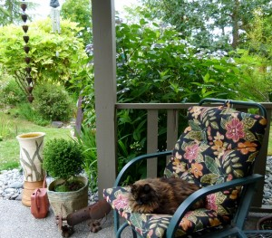 Cali takes a short nap beside the hydrangea as she awaits your arrival to The Artists' Garden Studio Tour